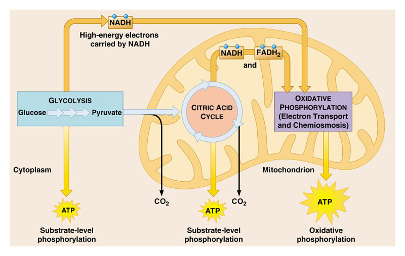 photosynthesis and respiration unit2 ip Aqa unit 2 biology respiration lesson 1 aerobic respiration  aerobic and anaerobic respiration - exercise and oxygen  gcse science biology (9-1) photosynthesis - duration: 5.
